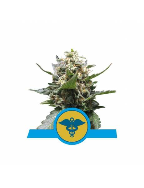 Royal Medic CBD |Royal...